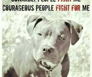 pit bull, save a life, and be courageous image