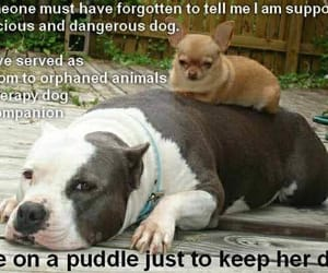 pit bull, dogs are love, and dogs are family image