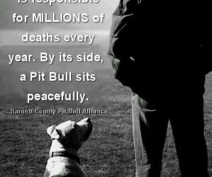 dogs are love, adopt don't shop, and fight for animal rights image