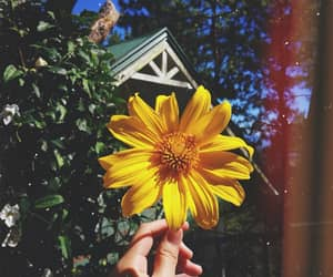 aesthetic, bright, and flower image