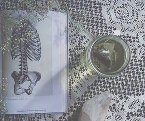 anatomia, anatomy, and cafe image