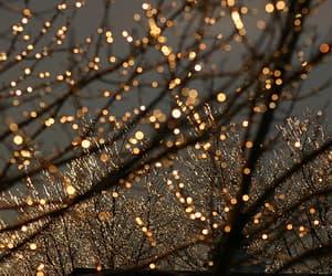 light, tree, and christmas image