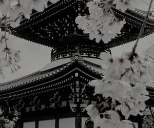 japan, flowers, and sakura image
