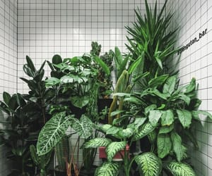 plants, aesthetic, and green image