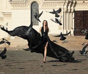 beauty, black, and birds image