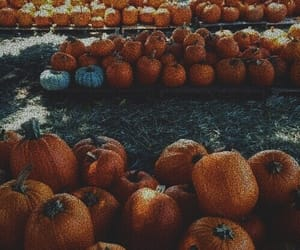 aesthetic, aesthetics, and fall image