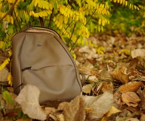 autumn, bag, and leaves image