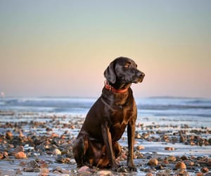 animals, beach, and dogs image