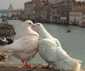 love, bird, and animal image
