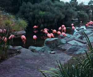animals, argentina, and birs image
