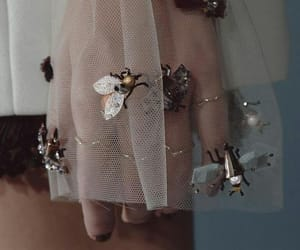fashion, bee, and details image