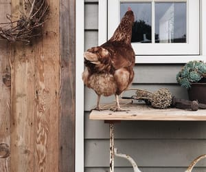 chickens, country living, and farm image