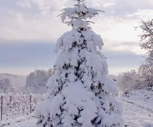 trees, cold, and heavy image