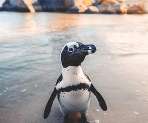 animals, penguin, and nature image
