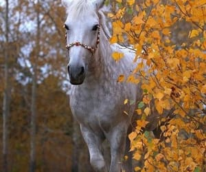 autumn, beautiful, and horse image