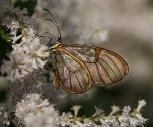 butterfly, nature, and photo image