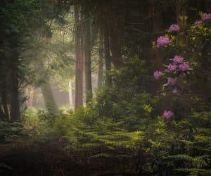 fantasy, forest, and landscape image