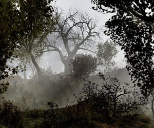 branches, fallout, and foggy image