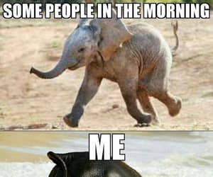 funny, elephant, and morning image