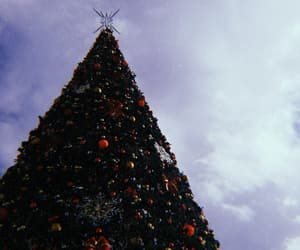 citylight, festive, and tirana image