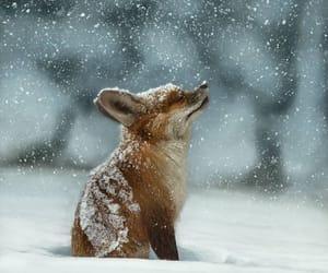 fox, magic, and pup image