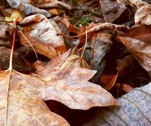 brown, leaves, and change image
