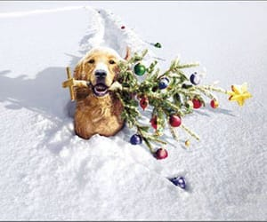 christmas, dog, and snow image