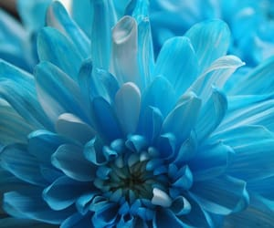aesthetic, blue, and flower image