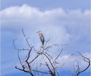 bird, colorado, and nature image