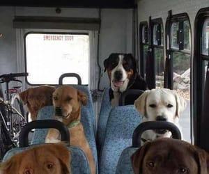 dog, bus, and animals image