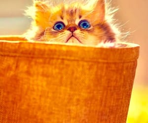 little cat, wallpaper, and cute pets image