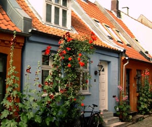 house, flowers, and home image