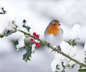 bird, robin, and pretty image