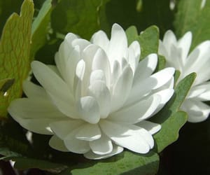 flowers, theme, and white image