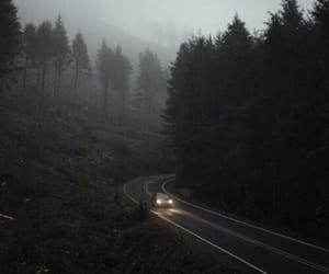 forest, aesthetic, and foggy image