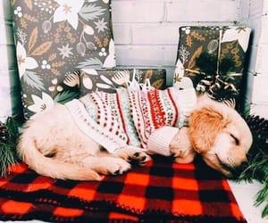 adorable, blanket, and christmas image