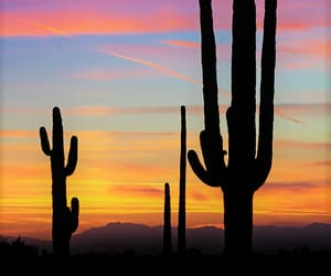 cactus, sky, and sunset image
