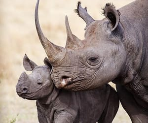africa and rhino image