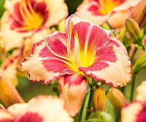 belleza, flor, and naturaleza image