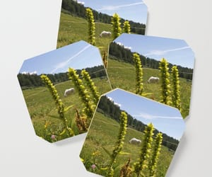 coasters, nature, and onlineshop image