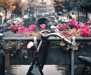 flowers, travel, and vintage image