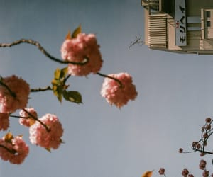 cherry blossom, hipster, and vintage image