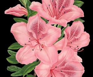 png and png floral image