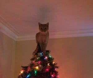 cat, christmas, and gatito image