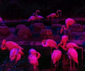 aesthetic, flamingos, and pink image