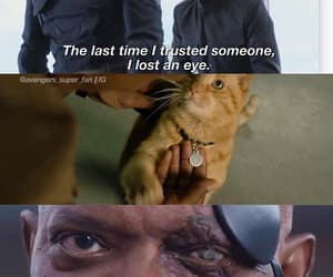 Avengers, cat, and chris evans image