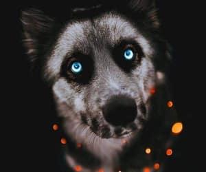 animals, dog, and Halloween image