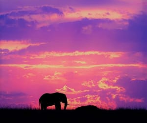 pink, Éléphant, and sky image