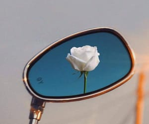 mirror, rose, and white image
