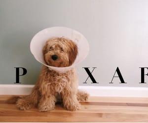 animal, dog, and pixar image